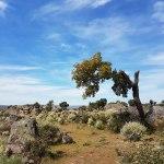 Faia Brava natuurreservaat