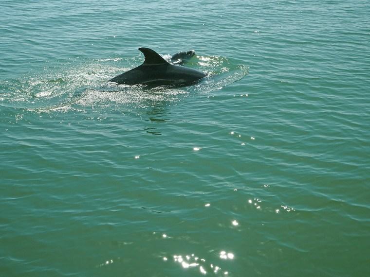 Dolfijnen Sado