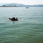 Dolfijnen spotten op de Sado