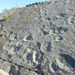 Gastblog: Sporen van Sauropoden in Oude Steengroeve