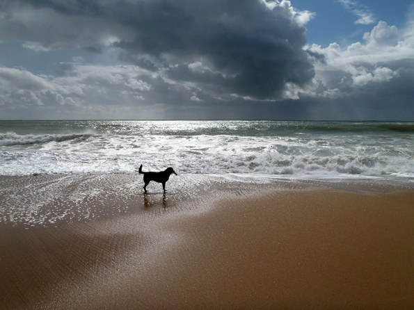Portugese Hondenrassen | Saudades de Portugal