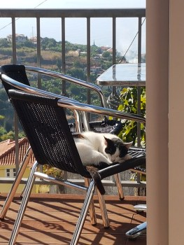 Susanne op Madeira: Beestjes | Saudades de Portugal