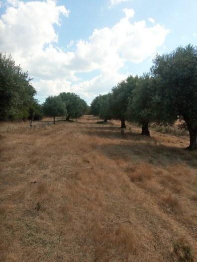 Passeite: onkruid | Saudades de Portugal