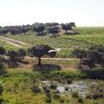 Portugal Património Natural – Alentejo