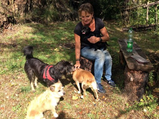 Agro-Toerisme: Honden