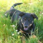 Kronkelpad: ObesiLuna en de Gelukkige Honden