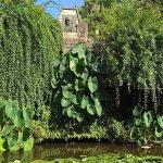 Compleet Coimbra: Botanische Tuin