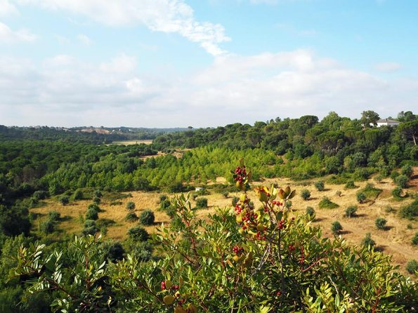 Natureza Centro de Portugal