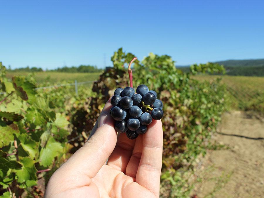 De Wijnbelofte van Portugal