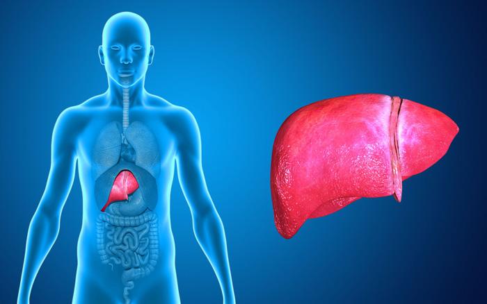 Detox ao Fígado