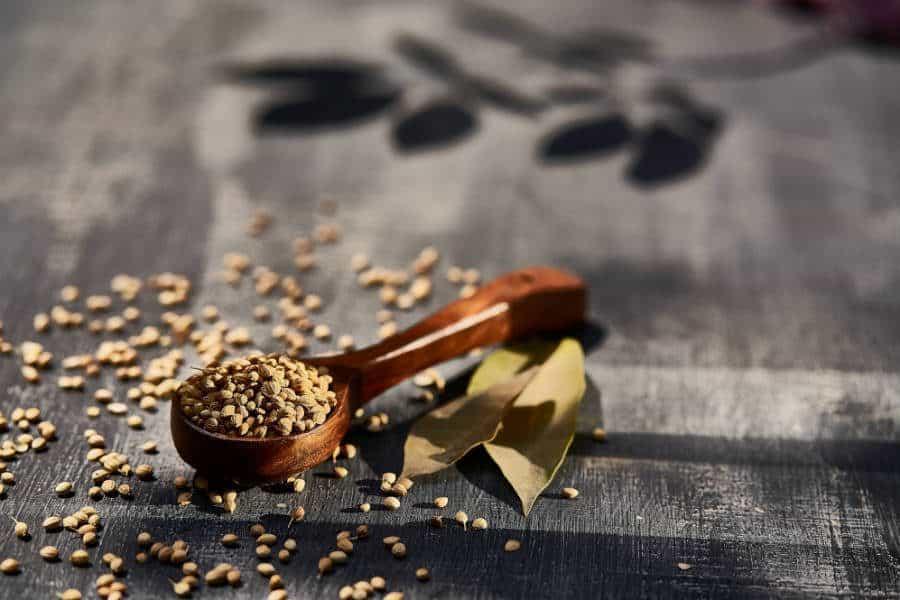 oleaginosas e sementes são alimentos ricos em fibras