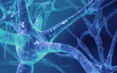 SPEM quer um Registo Nacional dos Doentes com Esclerose Múltipla
