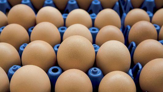 Comissão Europeia convoca reunião sobre ovos contaminados