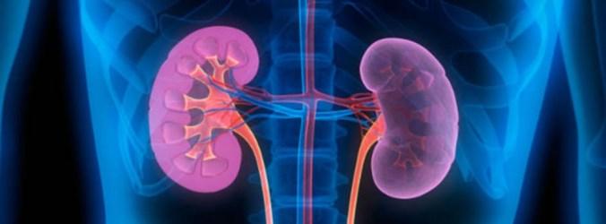 Desnervação renal reduz pressão arterial em doentes hipertensos