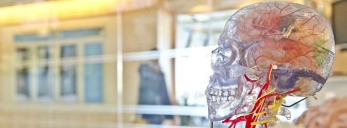 Especialistas declaram consenso mundial para determinar morte cerebral