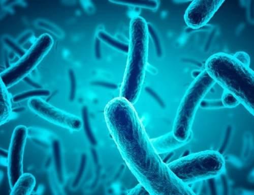 Probióticos e os benefícios nas doenças do aparelho respiratório