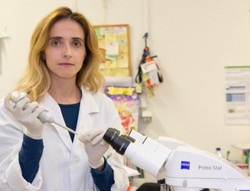 Cérebro e testículos. Investigadores portugueses confirmam semelhanças