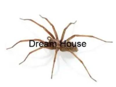 شركة مكافحة العنكبوت بالرياض