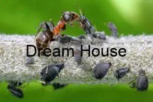 الحشرات التصنيفات الأقل