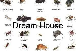 انواع الحشرات واسمائها