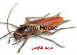 سبب وجود الصراصير في غرفة النوم