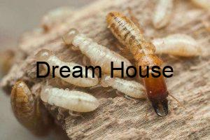 ملكة النمل الابيض