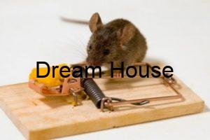 القضاء علي الفئران بالأعشاب
