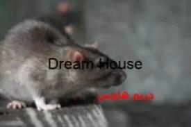 كيفية القضاء على الفئران في المجاري