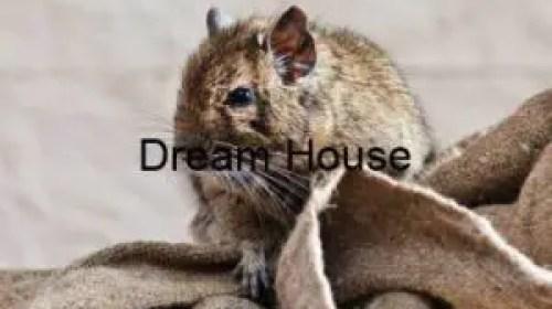 الفئران أسرة