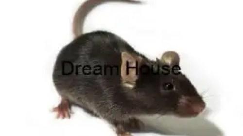 شركة مكافحة فئران بشقراء