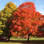 Treers