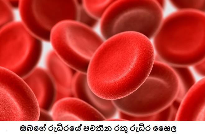 general_edures_heart_redbloodcells