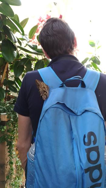 dubai_butterfly_garden_2