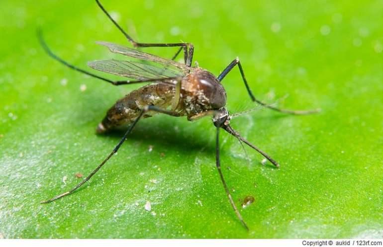 Welche ätherische Öle eignen sich als Mückenschutz