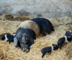 Modbury Organic Farm