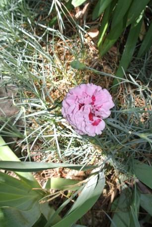 Still have carnations
