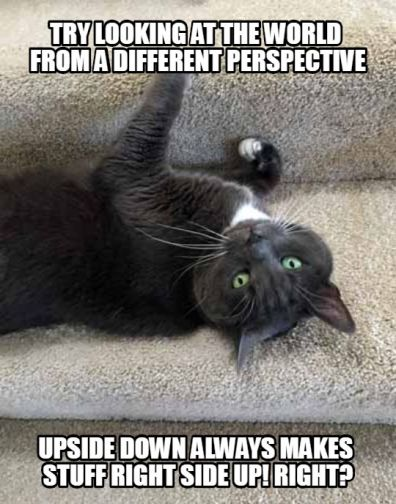 Friday Memes For Your Friday Smiles Savannah S Paw Tracks