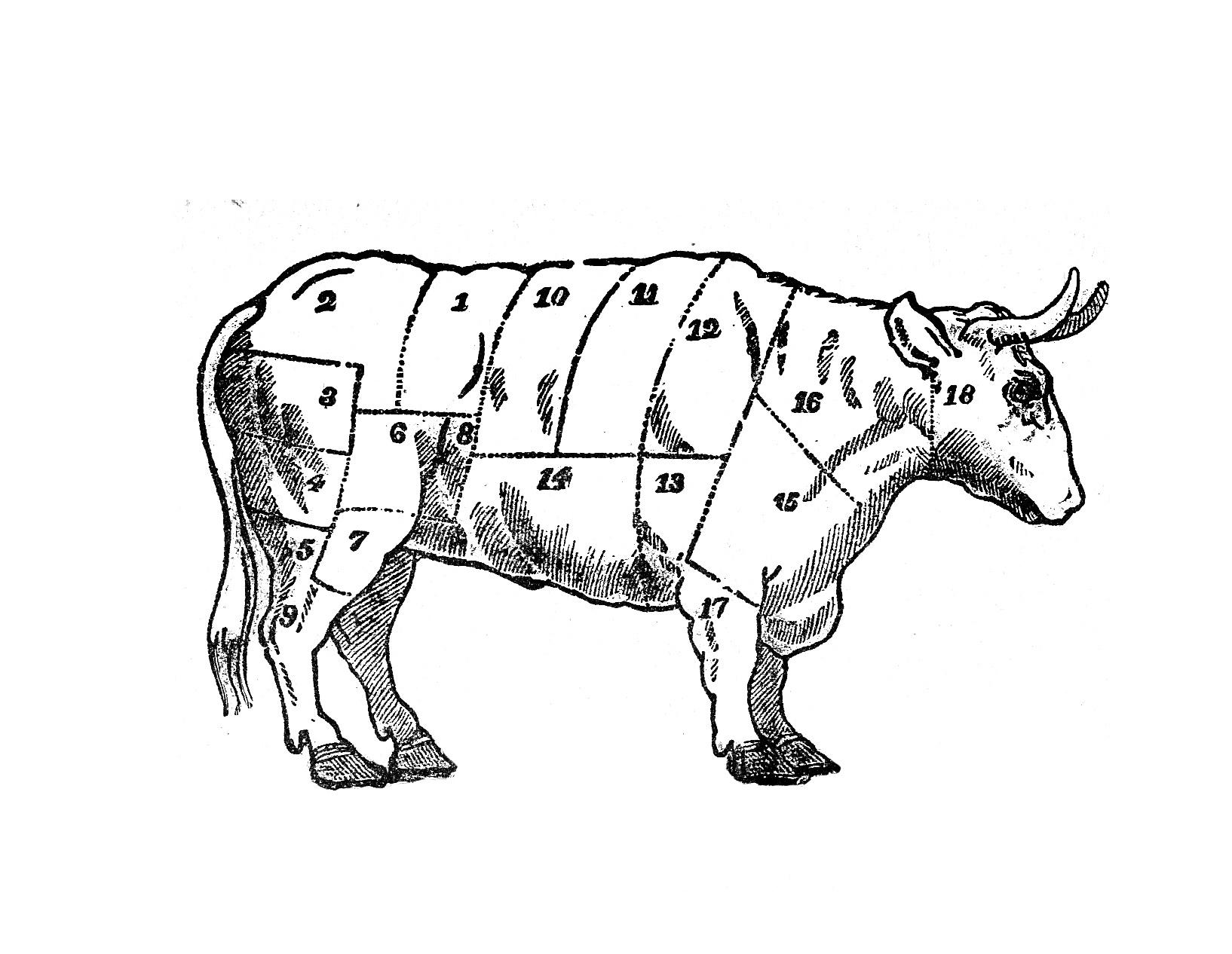 Vintage Cow Art Butcher S Beef Chart Download