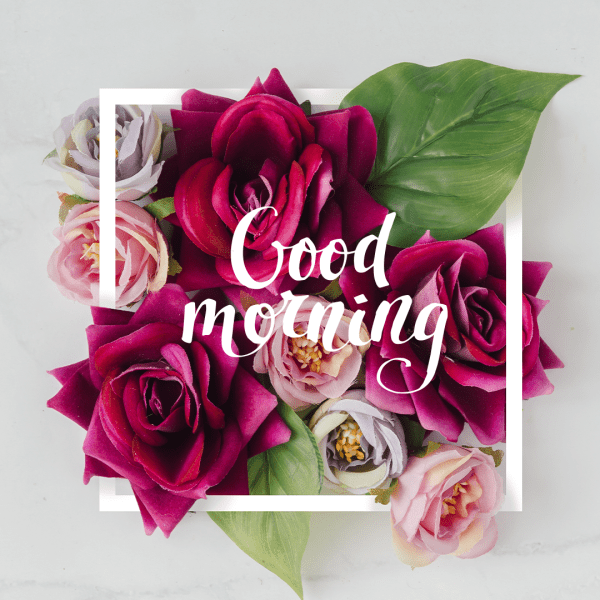 Good Morning, Start Your Day with Beautiful Rose Flowers.
