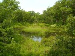 miller woods interdunal wetland wikipedia