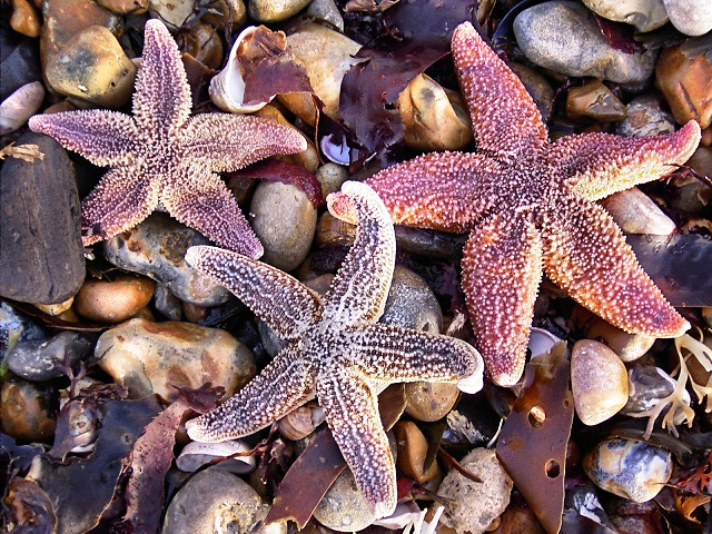 3 starfish - travel budget for retirement
