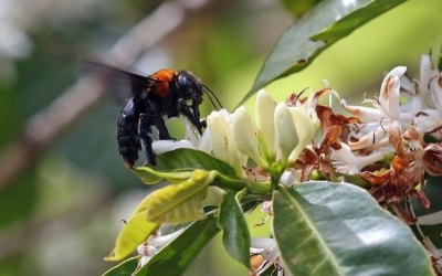 Countries urged to prioritize protection of pollinators to ensure food security at UN biodiversity conference