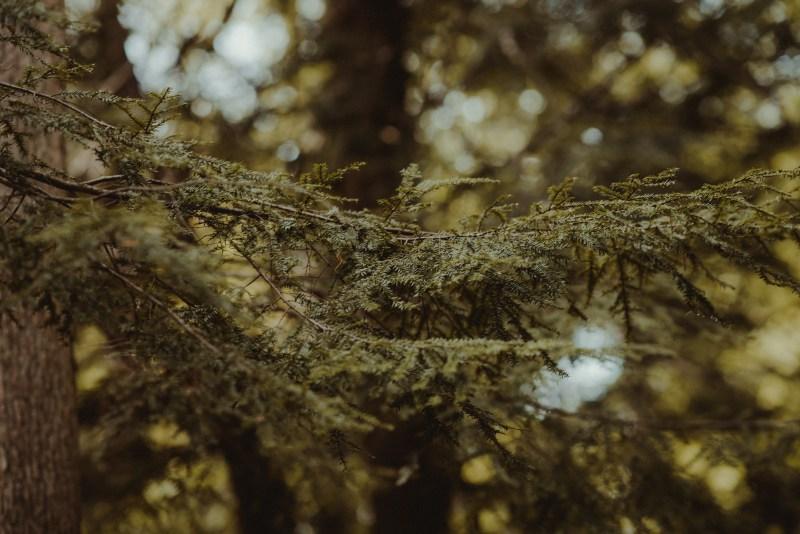 hemlocks by Annette Hoffman, Nettie Marie Photography