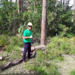 savemore-tree-service-Pine-tree-removal-loxahatchee-during2