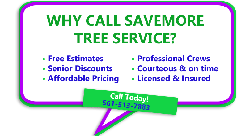 SaveMore Tree Service - Tree Removal, Tree Trimming, Stump Grinding and other tree services in Palm Beach County