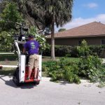 Tree Removal in Wellington - SaveMore Tree Service - Best Tree Service, Tree Trimming, Tree Removal and more in Loxahatchee, Wellington and Royal Palm Beach - Call 561-513-7883