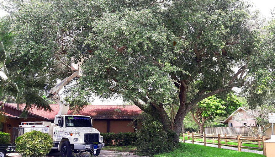 Preparing your Trees for a Hurricane in South Florida