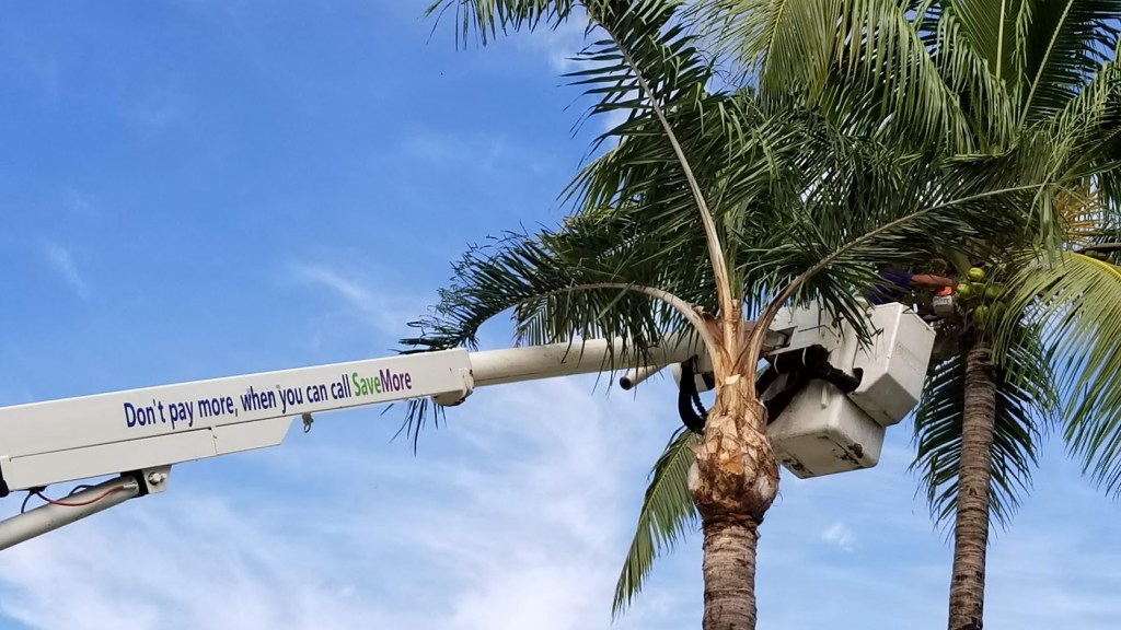 Tree Pruning in South Florida