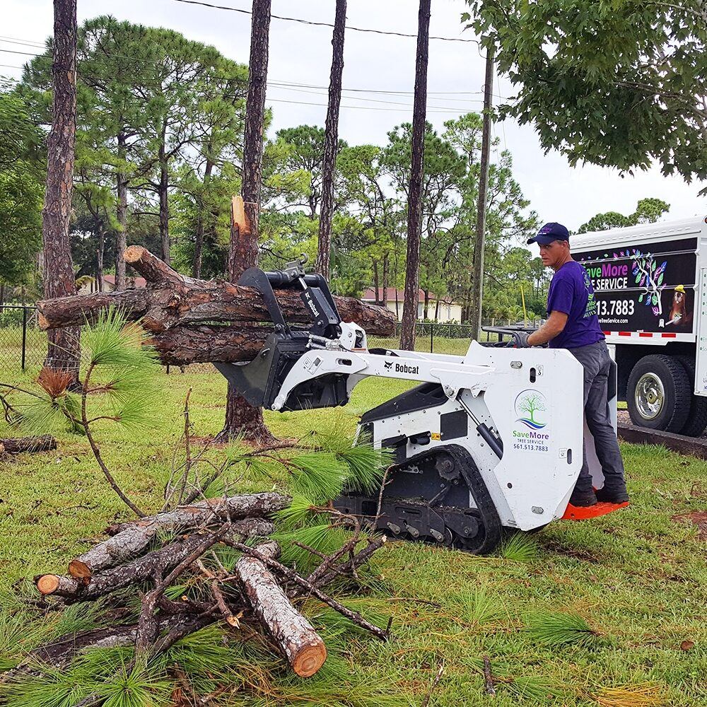 Tree Removal Loxahatchee, acreage, wellington, royal palm beach, jupiter, palm beach gardens - SaveMore Tree Service