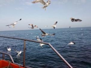 On board © Iván Gutiérrez